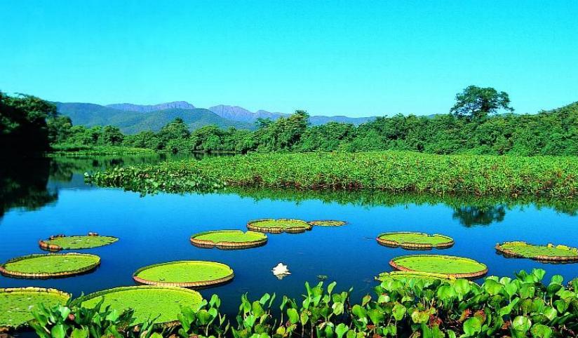 pantanal-localizacao-caracteristicas-fauna-e-flora