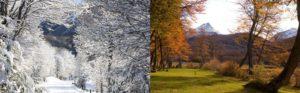 Floresta coberta de gelo e árvores com folhas secas de outono.