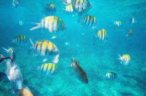 Cardume de peixes em Punta Cana.